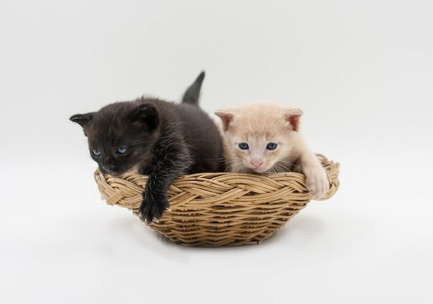 Zwarte en bruine katjes in rieten geïsoleerde mand