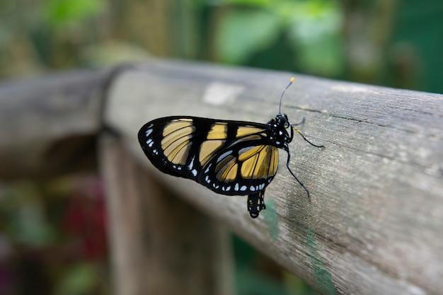 Zwarte en gele vlinder in campos do jordão, brazilië