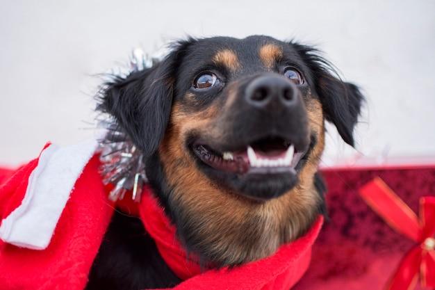 Zwarte hond gekleed in kerstkleding en geschenken aan zijn zijde.