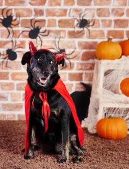 Zwarte hond in duivelskostuum