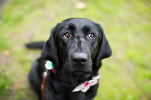Zwarte hond in een park met een onscherpe achtergrond