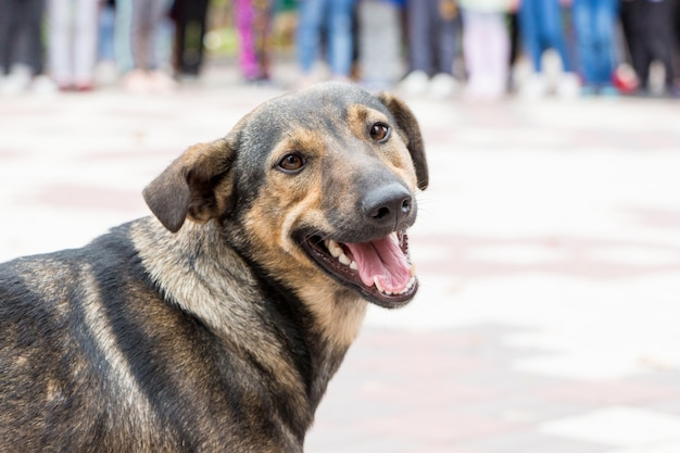 Zwarte hond in een stadspark op zoek naar de camera_