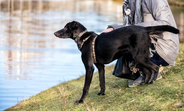 Zwarte hond in halsband in een park bij de rivier