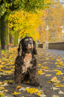 Zwarte hond op kleurrijke herfst park