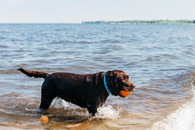 Zwarte hond plezier op het strand