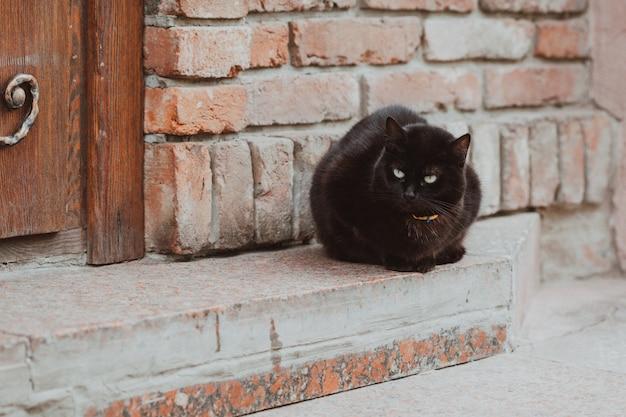 Zwarte kat buiten