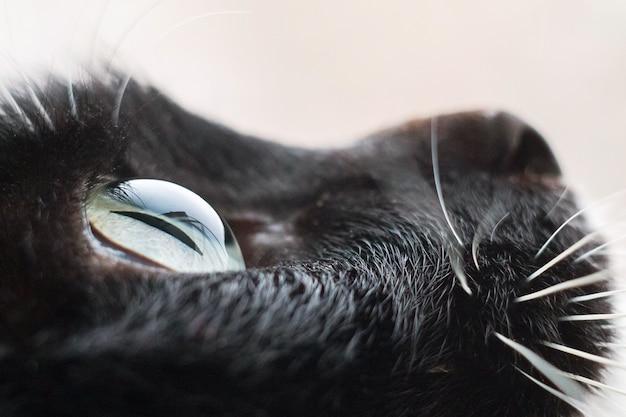Zwarte kat close-up