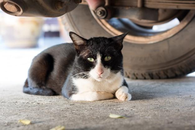 Zwarte kat die onder een auto legt