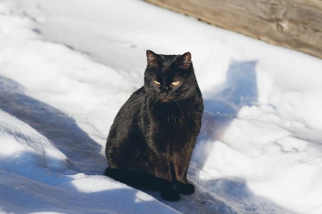 Zwarte kat in de sneeuw die in de zon zonnebaadt