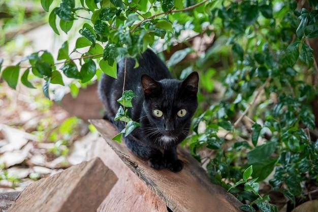 Zwarte kat in het bos op het hout
