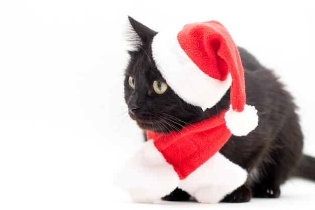 Zwarte kat in santa claus-kostuum. kerst jurk en santa claus rode hoed op zwarte kat. kerstmis geïsoleerd op wit.