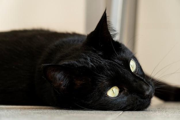 Zwarte kat kijkt door het raam terwijl hij op de keukenvloer ligt