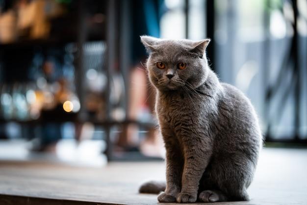 Zwarte kat met gele ogen in de ochtend