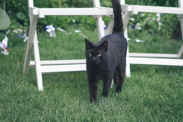 Zwarte kat op een achtergrond van groen gras
