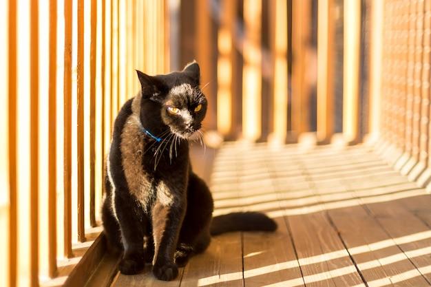 Zwarte kat op een balkon