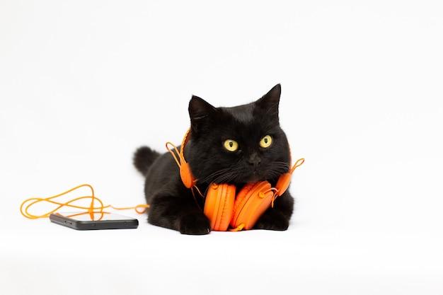 Zwarte kat op een witte achtergrond, luisteren naar muziek in een oranje koptelefoon en telefoon