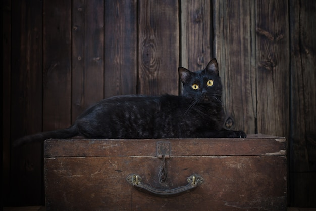 Zwarte kat op oude donkere houten