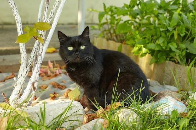 Zwarte kat staart aandachtig naar de camera