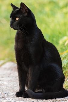 Zwarte kat zit op een pad tussen gras