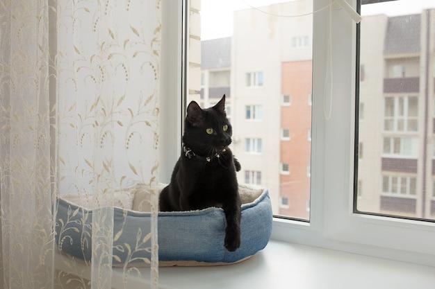 Zwarte kat zit op het raam in zijn bed