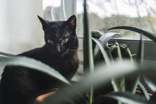 Zwarte kat zit overdag naast een kamerplant bij het raam