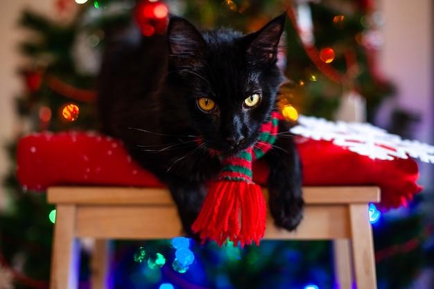 Zwarte kleine kat maine coon met rode en groene sjaal in de buurt van de kerstboom