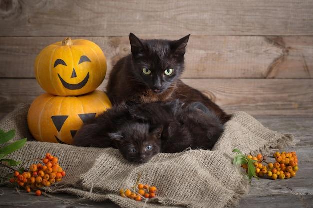 Zwarte kleine kat met halloween pompoenen