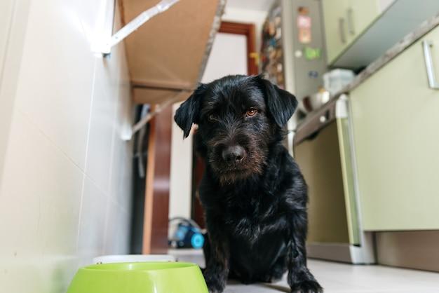 Zwarte labrador/tekkel mix hond poserend naast zijn voerbak.