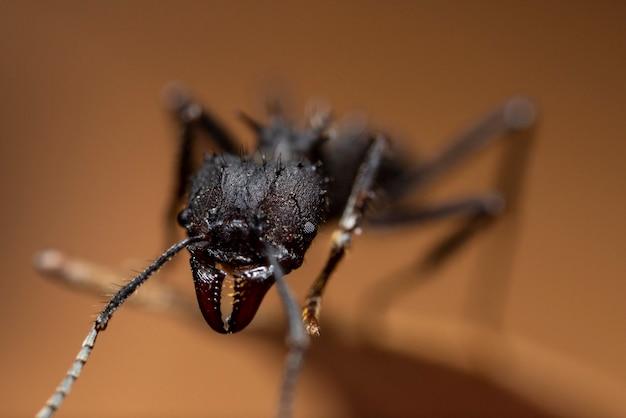 Zwarte mier die op een blad loopt