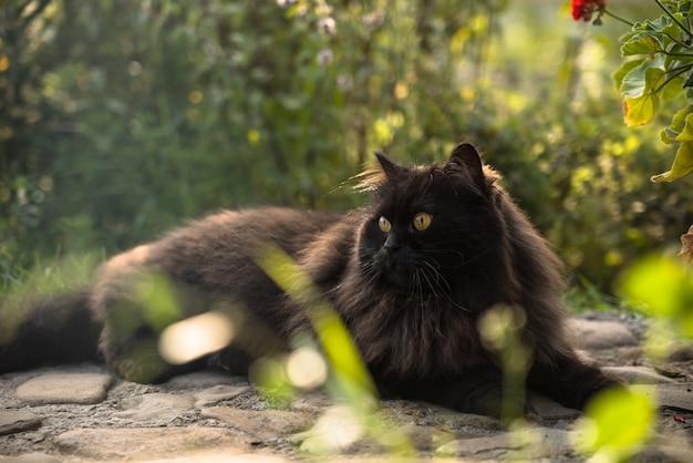 Zwarte perzische kat zit buiten in de tuin tussen bloemen