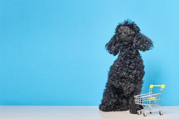 Zwarte pluizige stuk speelgoed poedel met winkelwagentje op blauwe muur, dierenwinkel concept kopie ruimte