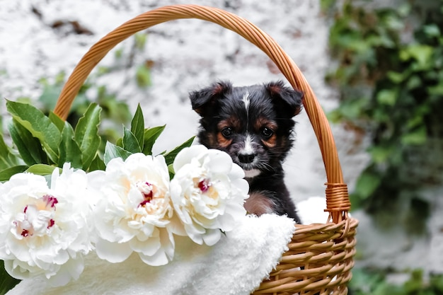 Zwarte puppy hondje in mand op achtergrond van groene natuur gelukkige hond cadeau met bloemen