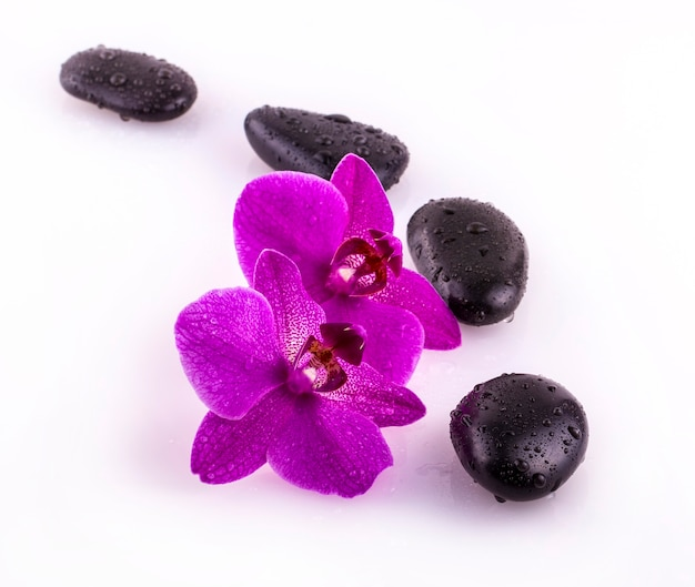 Zwarte stenen en orchideebloem met druppels