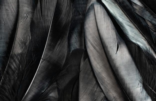 Zwarte veren textuur achtergrond