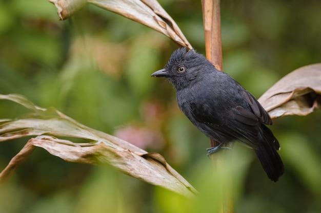 Zwarte vogel zat op een droge plant