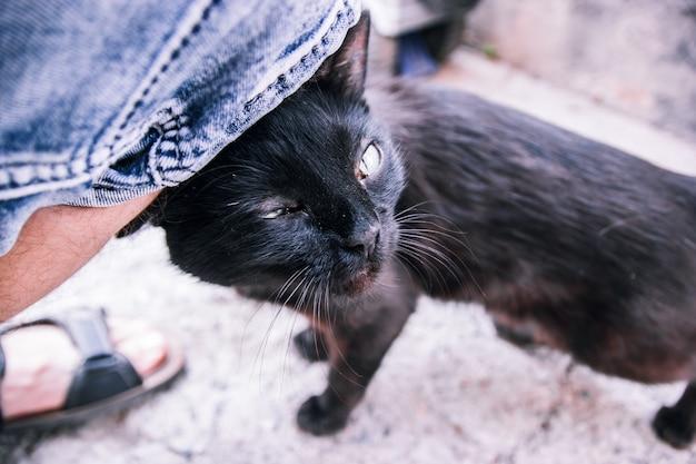 Zwarte volwassen zwerfkat wrijft over het been van een man op de smalle stoep van een oude straat