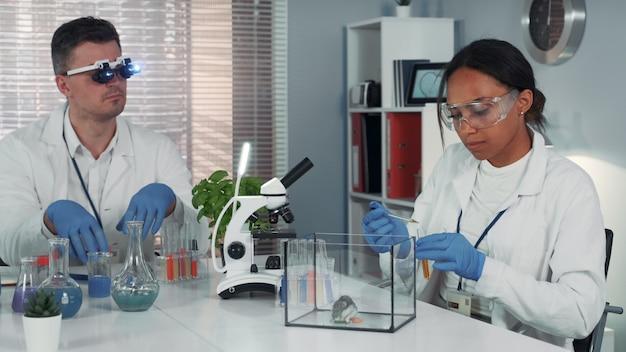 Zwarte vrouwelijke onderzoekswetenschapper die experiment met hamster in modern chemielaboratorium maakt