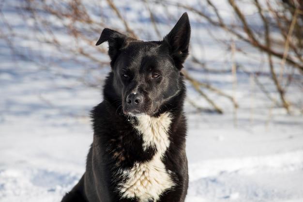 Zwarte zwerfhond op straat in de winter. hoge kwaliteit foto