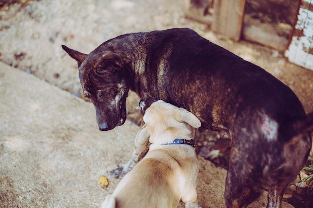 Zwerfhonden spelen met hen zoon. verlaten dakloze zwerfhonden liggen op straat.