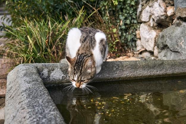 Zwerfkat drinkt uit een stenen zwembad in een oud park