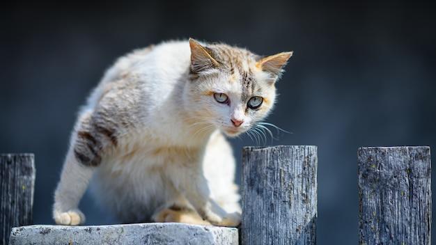 Zwerfkat op hek in zonnige dag