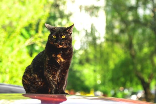 Zwerfkat zittend op het autodak op een parkeerplaats, dakloze dieren onder ons concept, groene achtergrond met kopieerruimtefoto