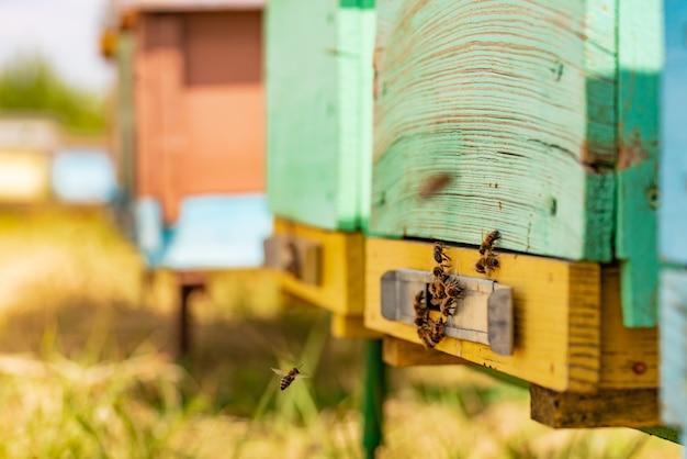 Zwerm bijen bij de ingang van de bijenkorf