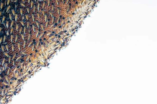 Zwerm bijen, bijenkorf in de natuur, tussen fel zonlicht, op witte achtergrond.