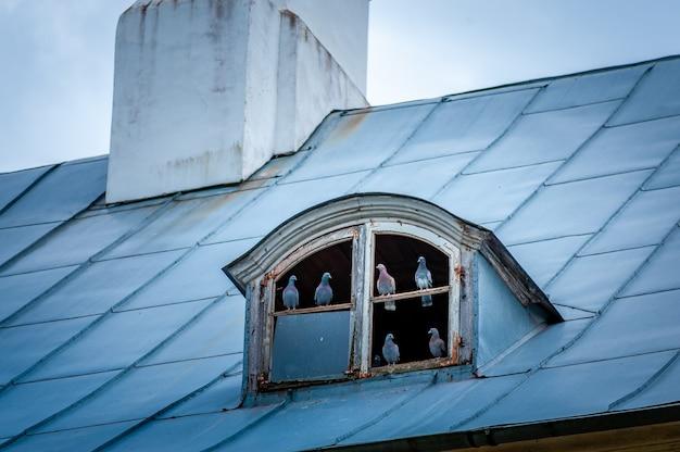 Zwerm duiven op het dak. duiven verzamelen zich op de ouderwetse zolder. duiven bij de dakkapel van het oude huis.