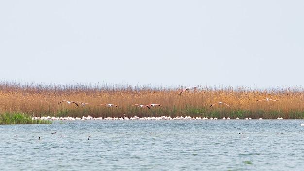 Zwerm flamingo's op het meer