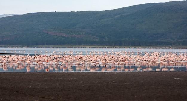 Zwerm grotere roze flamingo's