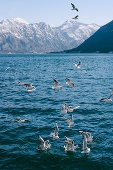 Zwerm meeuwen cirkelen boven het water