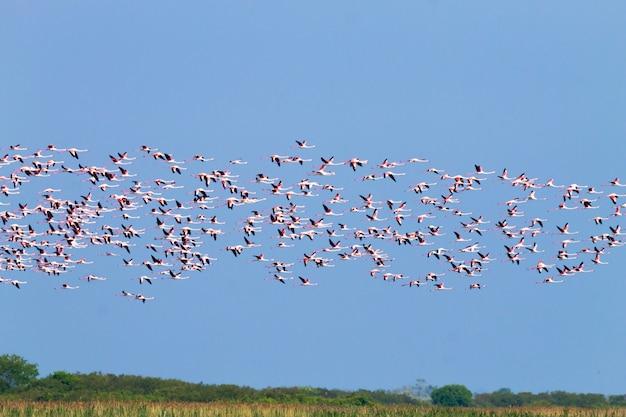 Zwerm roze flamingo's uit de lagune