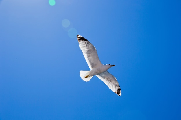 Zwerm vogels in de lucht op zonnige dag